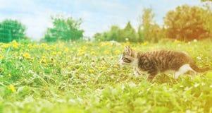 Little kitten runs on grass Royalty Free Stock Photography