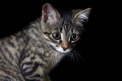 Little kitten. Little sad kitten on a black background royalty free stock photos