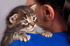 Little kitten. Sad little kitten on the girl's shoulder over grey background Royalty Free Stock Photography