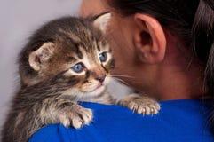 Little kitten. Sad little kitten on the girl's shoulder over grey background royalty free stock photography