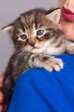 Little kitten Stock Photos