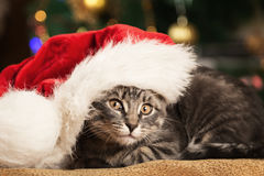 Little kitten in a Santa Claus hat Royalty Free Stock Photo