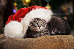 Little kitten in a Santa Claus hat Royalty Free Stock Photography