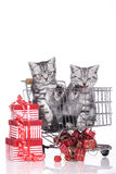Little kitten in shopping card Stock Photo