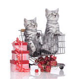 Little kitten in shopping card Stock Photography