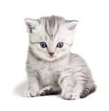 Little kitten sitting Royalty Free Stock Photo