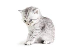 Little kitten sitting Royalty Free Stock Photos