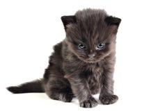 Little kitten sitting Stock Image