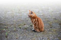Little kitten sitting alone outside, waiting Stock Images