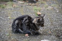 Little kitten sitting alone outside waiting Royalty Free Stock Photography