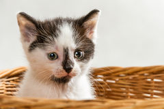 Little kitten sitting in the basket Royalty Free Stock Images