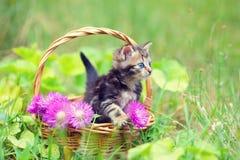 Little kitten sitting in a basket stock photos
