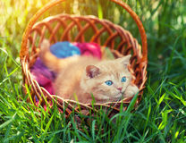 Little kitten sitting in a basket Royalty Free Stock Images