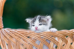 Little kitten sitting in a basket on  floral lawn Stock Photo
