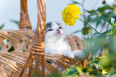 Little kitten sitting in a basket on  floral lawn Stock Photo