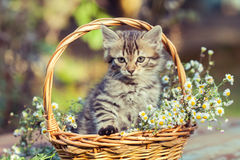 Little kitten sitting  in the basket with flowers. In the garden Royalty Free Stock Photos