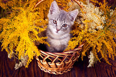 Little kitten sitting in the basket with flowers. On wooden background Royalty Free Stock Photo