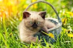 Little kitten sitting in a basket stock photography