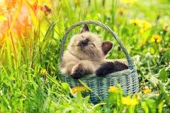 Little kitten sitting in a basket stock images