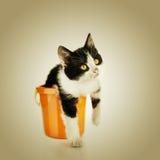Little kitten sitting in bucket Royalty Free Stock Image