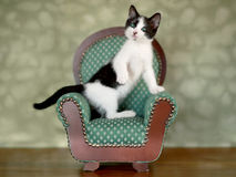 Little Kitten Sitting in a Chair Royalty Free Stock Photo