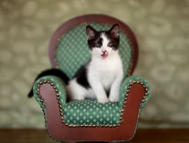 Little Kitten Sitting in a Chair Royalty Free Stock Image