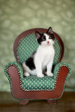 Little Kitten Sitting in a Chair Stock Images