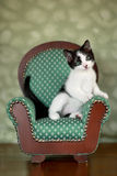 Little Kitten Sitting in a Chair Stock Image