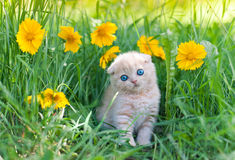Little kitten sitting in flowers royalty free stock photography