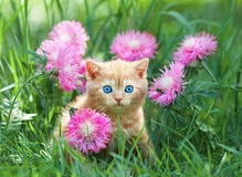 Little kitten sitting in flowers Royalty Free Stock Photos