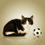 Little kitten sitting with a football ball Stock Image