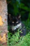 Little Kitten Sitting In Grass. Cute Little Kitten Are Sitting In Green Grass Stock Photo