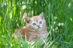 Little kitten sitting in the grass Stock Photos