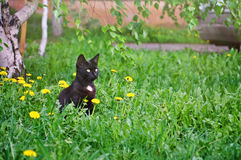 Little kitten sitting in the grass. Picture of a little curious black kitten sitting in the grass under the birch tree Stock Photo