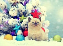 Little kitten sitting near fir tree Royalty Free Stock Photo