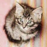 Little kitten sitting on a rug. Stock Photo