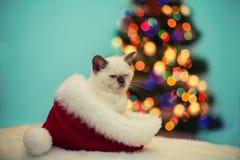 Little kitten sitting in Santa's hat Stock Photo