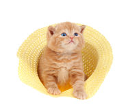 Little kitten sitting in a straw hat Stock Images