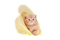 Little kitten sitting in a straw hat Stock Photo