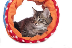 Little kitten sitting in a toy tunnel Royalty Free Stock Photography