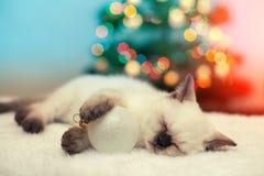 Little kitten sleeping against christmas tree Royalty Free Stock Images