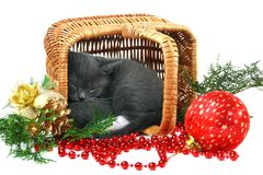Little kitten sleeping in a basket. Royalty Free Stock Images
