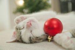 Little kitten sleeping with bauble Stock Photos