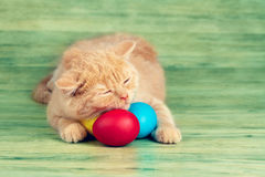 Little kitten sleeping on colored eggs Stock Photos