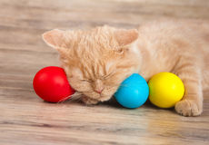 Little kitten sleeping on colored eggs. Cute little beige kitten sleeping on colored easter eggs Royalty Free Stock Image