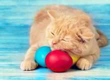 Little kitten sleeping on colored eggs. Cute little beige kitten sleeping on colored easter eggs Royalty Free Stock Images