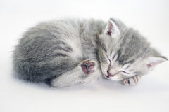 Little kitten sleeping. Grey tabby kitten. Stock Image