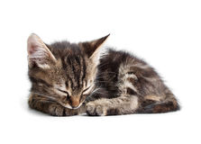 Little kitten sleeping isolated on white Royalty Free Stock Photo