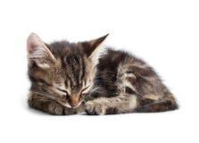 Little kitten sleeping isolated on white Royalty Free Stock Photo