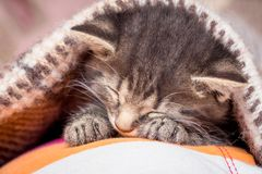 Little kitten is sleeping. The kitten in the bedroom is covered stock images